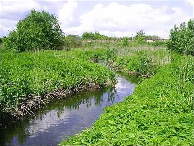 Река Дон за городом Новомосковском