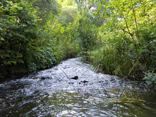 река Чир