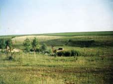 река Медведица, фото 1
