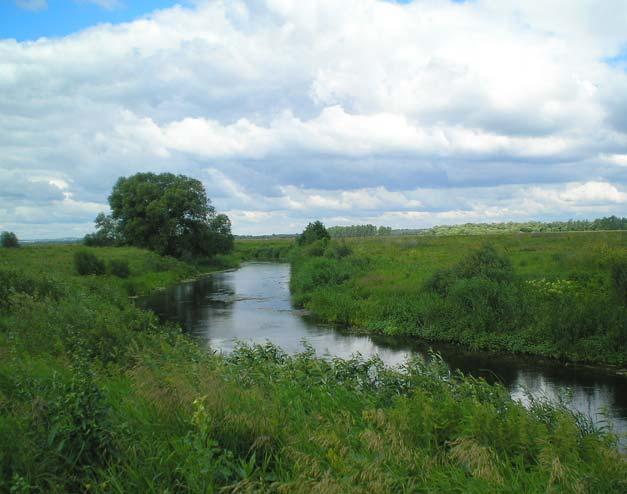 Река Тихая Сосна у Дивногорья